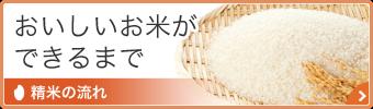 おいしいお米ができるまで 精米の流れ
